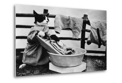 Dressed Up Cat Washing Clothes in Wash Tub--Metal Print