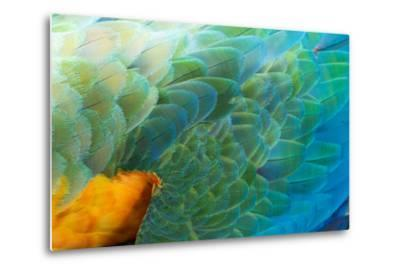 Close Up of the Wing and Feathers of a Beautiful Wild Harlequin Macaw-Alex Saberi-Metal Print