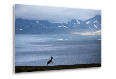Reindeer, Svalbard, Norway-Paul Souders-Metal Print