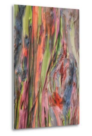Rainbow Eucalyptus Detail, Hawaii-Vincent James-Metal Print
