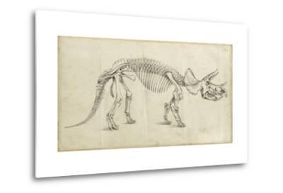 Dinosaur Study II-Ethan Harper-Metal Print