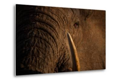 A Wild Bull Elephant Comes to Drink at the Ithumba Stockade-Michael Nichols-Metal Print