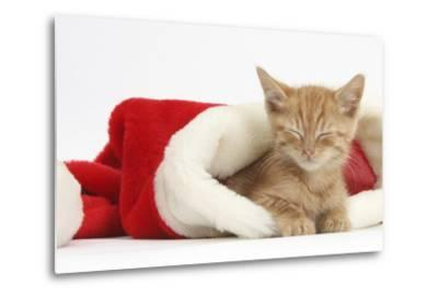 Sleepy Ginger Kitten, 5 Weeks, in a Father Christmas Hat-Mark Taylor-Metal Print