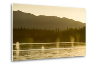 Geysers of Spray from Six Humpback Whales Exhaling in the Inside Passage-Jonathan Kingston-Metal Print