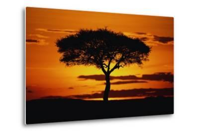 Silhouetted Camelthorn Tree at Sunset-Paul Souders-Metal Print