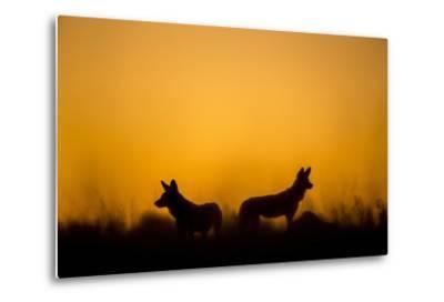 Wild Dogs, Moremi Game Reserve, Botswana-Paul Souders-Metal Print