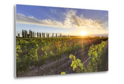 Argentina, Mendoza, Lujan De Cuyo, Malbec Grape Wineries-Michele Falzone-Metal Print