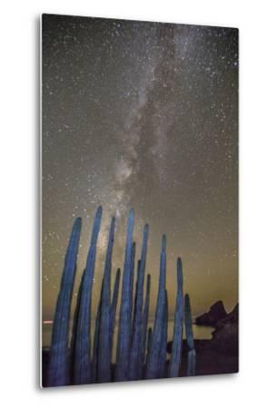 Night View of the Milky Way with Organ Pipe Cactus (Stenocereus Thurberi) in Foreground-Michael Nolan-Metal Print