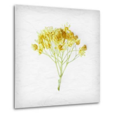 Meditative Yellow-Daniela Savone-Metal Print
