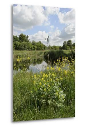 Wind Pump, Charlock (Sinapis Arvensis) Flowering in the Foreground, Wicken Fen, Cambridgeshire, UK-Terry Whittaker-Metal Print