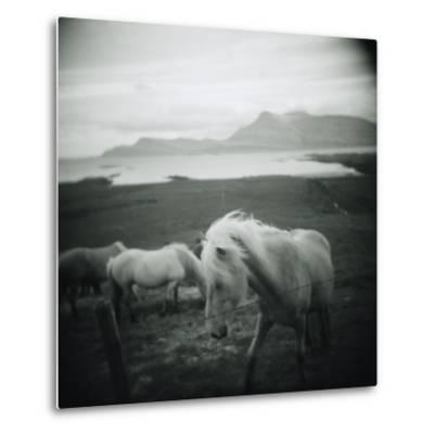 Horses in Pasture--Metal Print