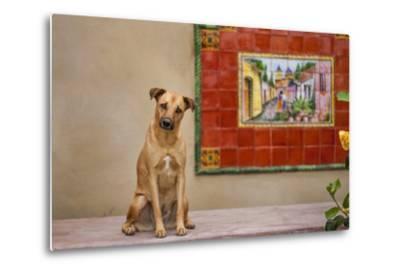 Pet Dog, Baja, Mexico--Metal Print
