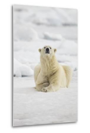 Polar Bear, Svalbard, Norway-Paul Souders-Metal Print