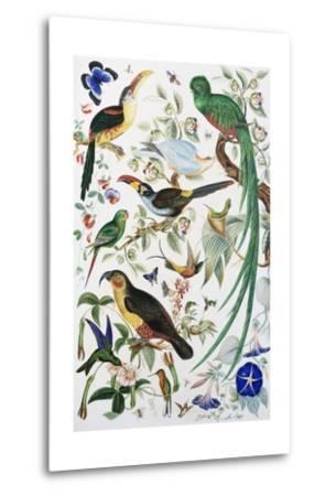 Exotic Parrots--Metal Print