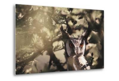 Southern Africa, Botswana, Spotted Eagle Owl, Bubo Africanus-Stuart Westmorland-Metal Print