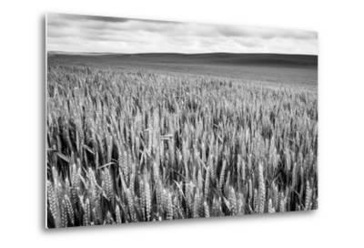 Palouse Wheat Field, Washington-James White-Metal Print