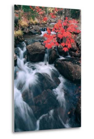 Jordan Stream in Autumn II, Maine Coast--Metal Print