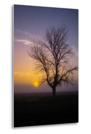 Misty Morning Sun and Tree Design II--Metal Print