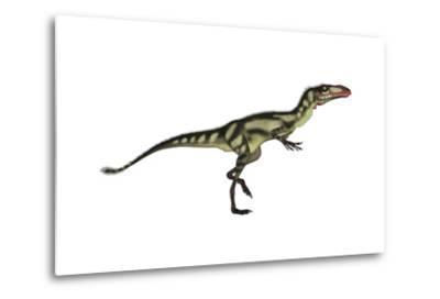 Dilong Dinosaur-Stocktrek Images-Metal Print
