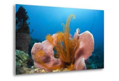 Sponge and Crinoid on a Coral Reef-Reinhard Dirscherl-Metal Print