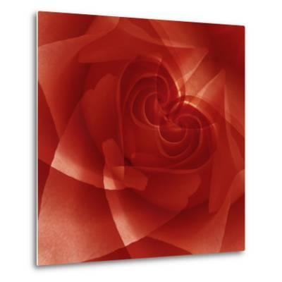 USA, Colorado, Lafayette. Red Rose Montage-Jaynes Gallery-Metal Print