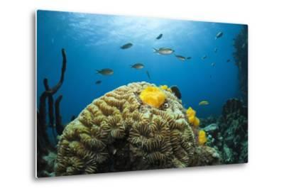Caribbean Coral Reef-Reinhard Dirscherl-Metal Print