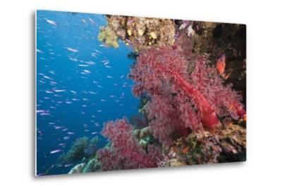 Fiji Coral Reef-Reinhard Dirscherl-Metal Print