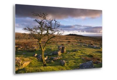 Looking to Pew Tor from Feather Tor, Dartmoor, Devon, England. Autumn (September)-Adam Burton-Metal Print