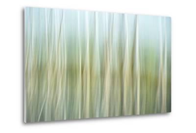 Nature Abstract, Celery Bog Wetlands, West Lafayette, Indiana-Rona Schwarz-Metal Print