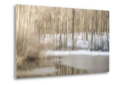 Multiple Exposure of Trees in Winter, Eagle Creek Park, Indiana-Rona Schwarz-Metal Print