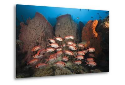 Soldierfish on Coral Reef-Reinhard Dirscherl-Metal Print