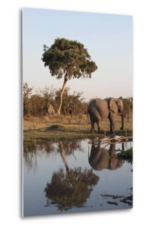 African Elephant-Sergio Pitamitz-Metal Print