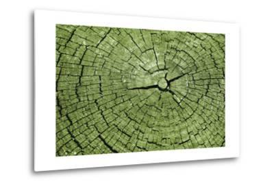 Tree Rings 4-GI ArtLab-Metal Print