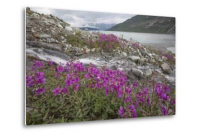 Alaska, Glacier Bay National Park. Small Stream Cascade-Jaynes Gallery-Metal Print