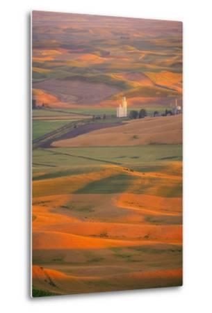 Summer Wheat, Barley and Lentil Fields, Washington, Palouse Area-Stuart Westmorland-Metal Print