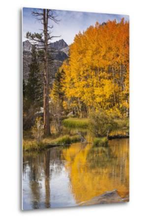 Eastern Sierra, Bishop Creek, California Outlet and Fall Color-Michael Qualls-Metal Print