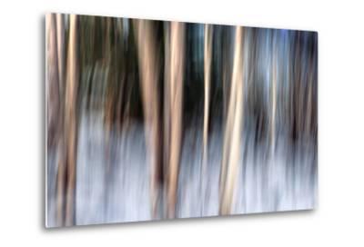 Birchbank in Winter-Ursula Abresch-Metal Print