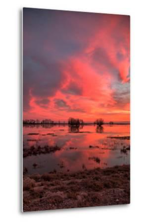 Fiery Marsh Sunset Sky--Metal Print