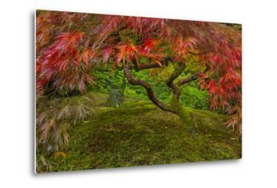 Japanese Maple Tree in Autumn, Japanese Gardens, Portland, Oregon-Chuck Haney-Metal Print