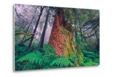 Time Tree, California Redwood Coast--Metal Print