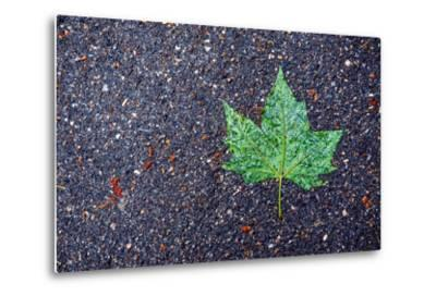 A Wet Green Leaf on the Street-Keith Ladzinski-Metal Print