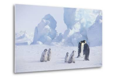 Young Emperor Penguins and Adult-DLILLC-Metal Print