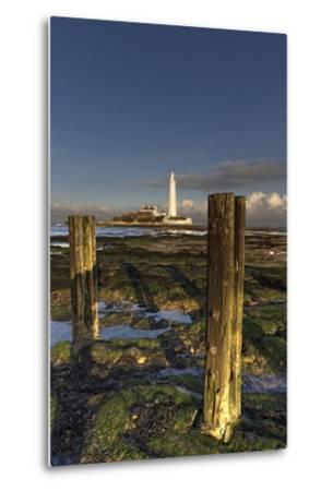 Wooden Posts and Lighthouse in Distance; Whitley Bay, Northumberland, England-Design Pics Inc-Metal Print