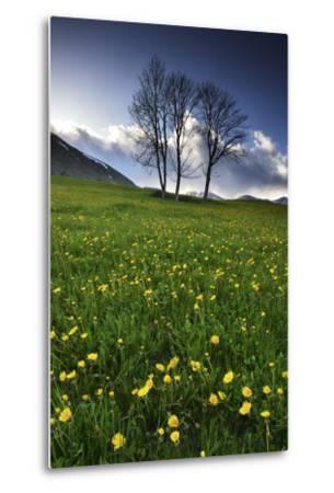 Meadow with Yellow Dandelions, Gap, France-Keith Ladzinski-Metal Print