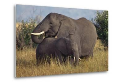 Adult and Young Elephant-DLILLC-Metal Print