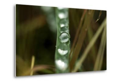 Close Up of Water Droplets on a Leaf-Keith Ladzinski-Metal Print
