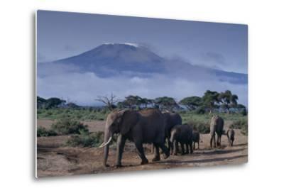 Elephants-DLILLC-Metal Print