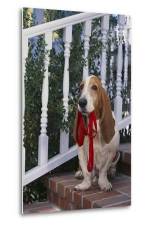 Waiting on the Front Porch for a Walk-DLILLC-Metal Print