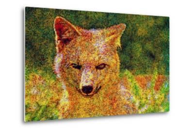 Fox--Metal Print