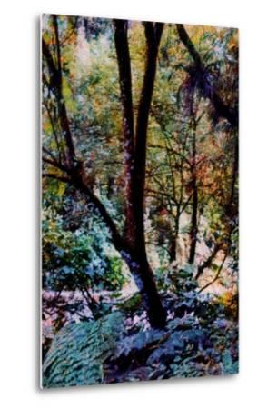 Nature-Andr? Burian-Metal Print
